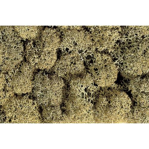 MUSGO GRIS PIEDRA (35 gr)